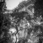 Two Bridges - Oak Tree and Bridge