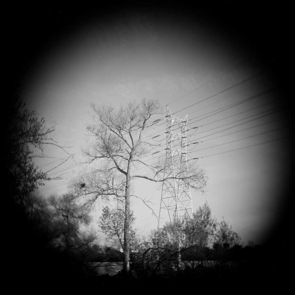 Tree and Electrical Tower
