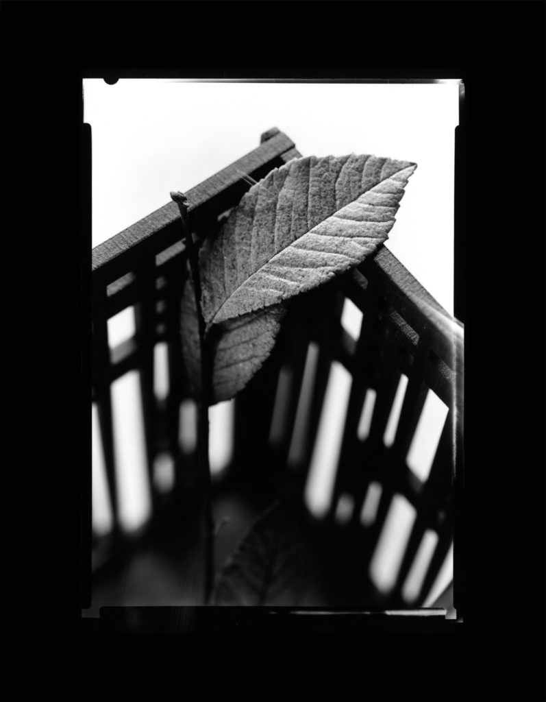 Leaf in Wooden Box - Black and White, 5x7
